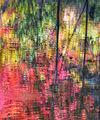 West Fork,Oak Creek,Sedona,Fall colors,arizona