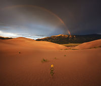 sunflower,great sand dunes,colorado,rainbow