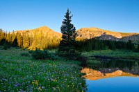 Eccles Pass,pond,wildflowers,Colorado