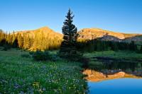 Eccles Pass,pond,wildflowers,Colorado