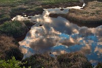Summit Lake Reflections