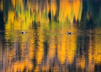 Red Mountain,Colorado,ducks