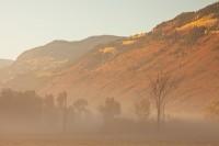Ridgway Fog II