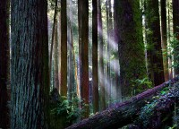 Arcata,California,redwood,forest