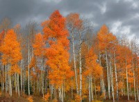 Aspen Afternoon #220