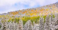 Arizona Snowbowl, snow, leaves, Flagstaff, Arizona