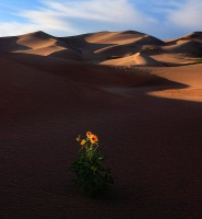 The Last Sunflower #069