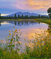 Kachina wetlands, sunrise, sunflower, San Francisco Peaks, Arizona, Flagstaff