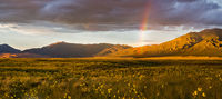 Great Sand Dunes,Colorado,rainbow,sunflowers