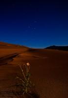 sunflower,star,great sand dunes,Colorado