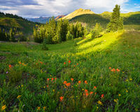 Porphyry, wildflowers, Colorado