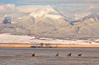 deer,snow,westcliffe,wet mountain,Sangre