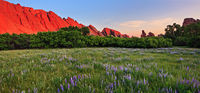 sunrise,Roxborough,Colorado,lupine,field