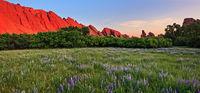 sunrise,Roxborough,Colorado,lupine,field