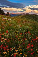 Shrine Mountain,Colorado,wildflower