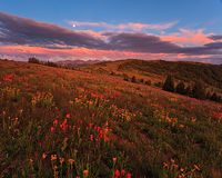 Shrine Ridge,moon,wildflower,Vail