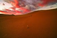 sunflower, Great Sand Dunes, Colorado, sunset