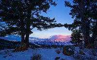 Wedding Tree,Wyoming,Grand Teton,sunrise