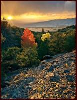 red aspen,aspen,great sand dunes,Colorado