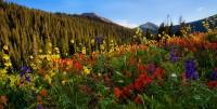field,flowers,colorado,snowmass
