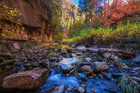Arizona Autumn