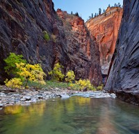 Zion National Park,Virgin,Narrows,Utah,fall colors