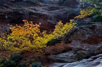 Zion National Park,Hidden Canyon,maples