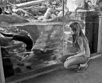 An Otter's Life