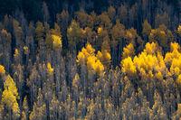 Vail,Colorado,aspen