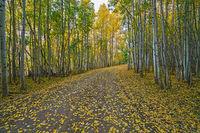 autumn,buffalo pass,road