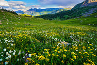 Gore Range,Eccles Pass,wildflowers,Colorado