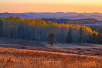 Hart Prairie,Flagstaff,sunset,autumn