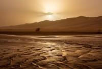 Golden Dunes #391