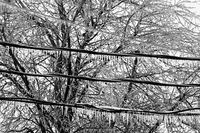 ice storm,kansas,dodge city,trees