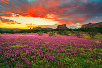 Sedona,clover,Arizona