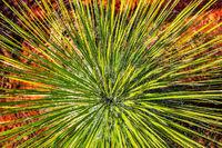 Sedona,plant,desert,symmetry