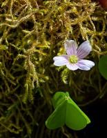 Rain Forest Bloom