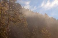 Foggy Forest II