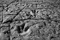dinosaur, tracks, picketwire canyon, Colorado