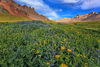 Porphyry Basin,wildflowers,Colorado,San Juans