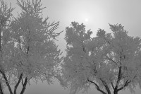 fog,Lake Pueblo,Colorado,tree