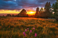 Arizona Snowbowl, sunset, flagstaff, Arizona, lupine
