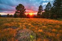 Arizona, Snowbowl, sunset, Aspen Nature Loop