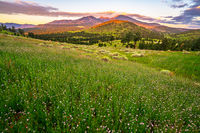 wildflowers, Sunset Crater, Flagstaff, sunrise