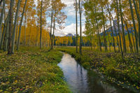 creek,owl creek pass,true grit,autumn