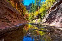 Oak Creek,West Fork,fall colors,sedona,arizona