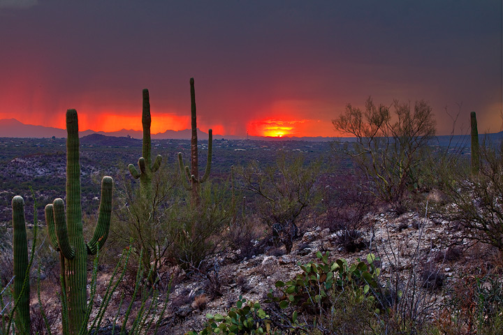 monsoon,Arizona,saguaro national park