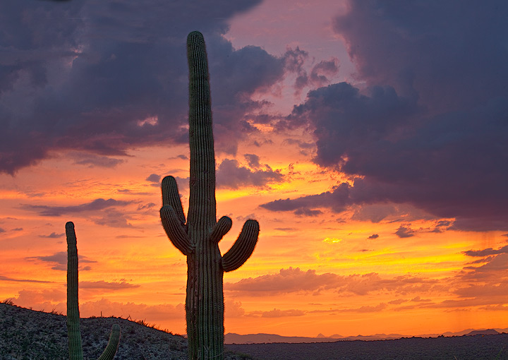 Saguaro National Park,Arizona,sunset