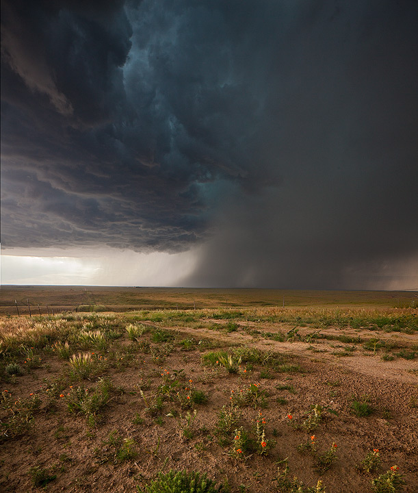 supercell,thunderstorm,Logan County,Colorado,wildflowers