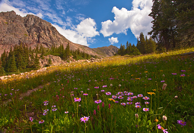 wildflowers,Vail,Colorado,Deluge Lake